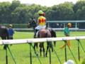 [20130526][競馬][京都競馬場][京都競馬場20130526]P5260635.JPG