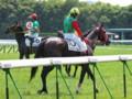 [20130526][競馬][京都競馬場][京都競馬場20130526]P5260639.JPG