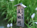 [大阪][枚方][山田池公園]P6230009.JPG