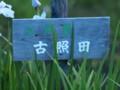 [大阪][枚方][山田池公園]P6230013.JPG
