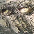 [風景]木になる動物園:サル