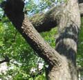 [風景]木になる動物園:ウマ