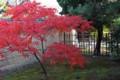 南宗寺-禅堂前の紅葉