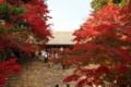 神護寺-金堂へ登る石段