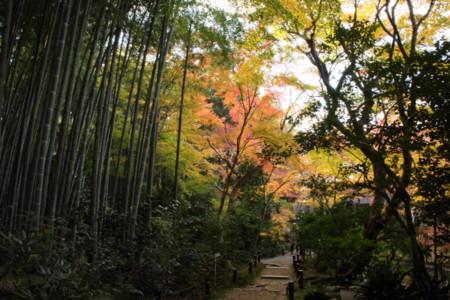 京都_圓光寺