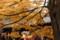 東福寺-回廊