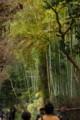 京都嵯峨野_竹林の道