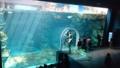 [twitter] このペンギンの水槽すごいなー