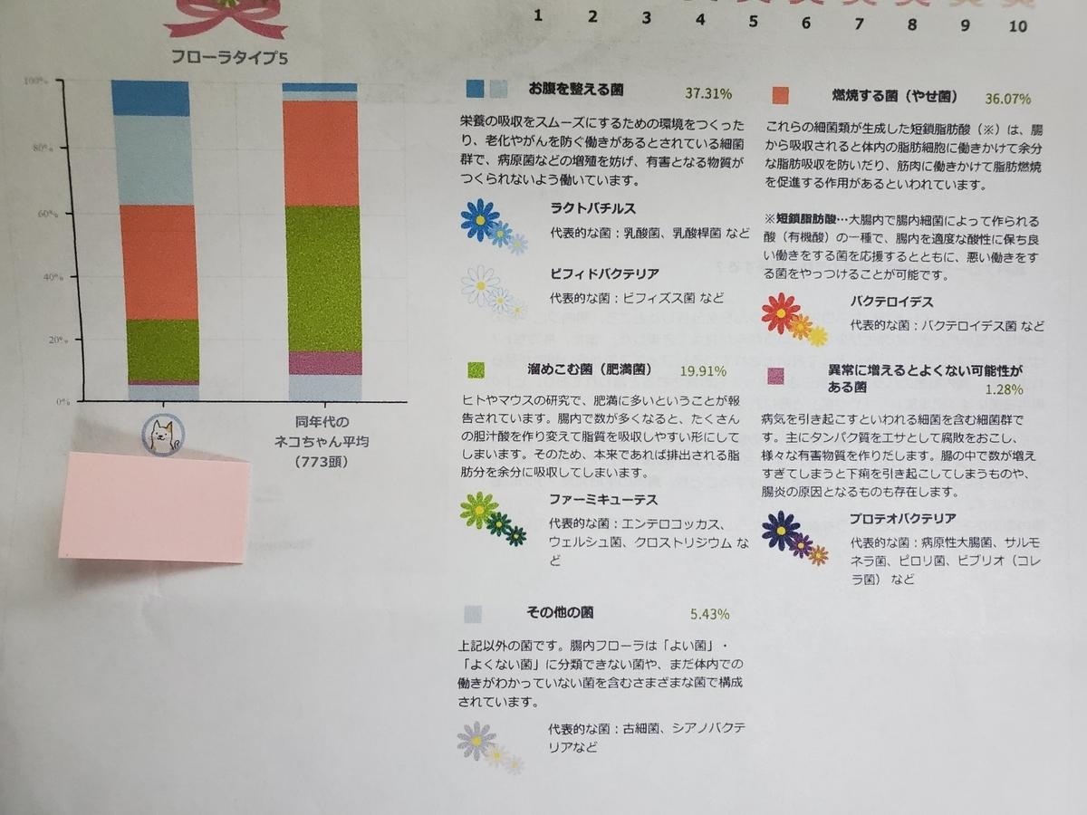 細菌の全体のバランス(うちのねこの検便結果)