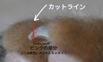 猫の爪切りのカットライン説明図