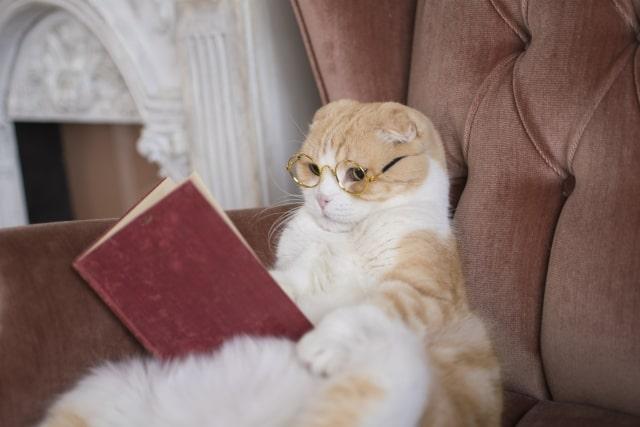 人生に行き詰まった時に読む本 「人生はニャンとかなる!」の口コミは?