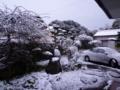2010年12月31日(金)鹿児島の積雪