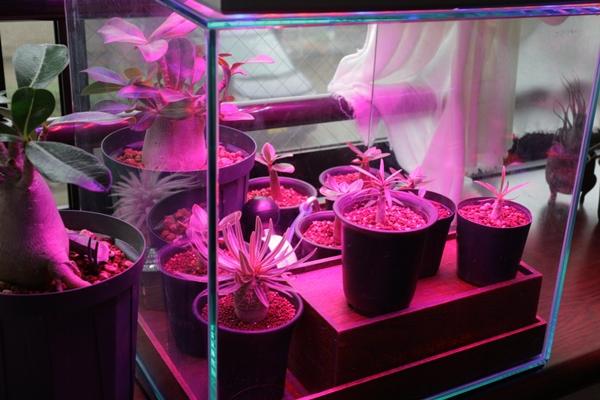 f:植物用LEDライト