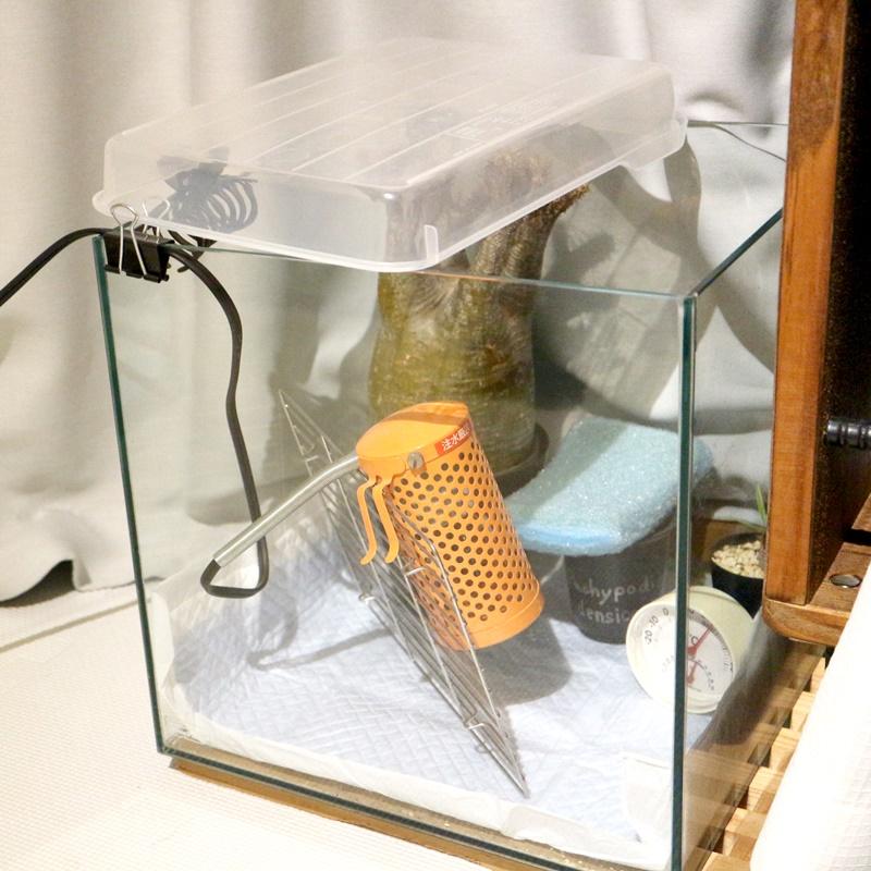 パキポディウムグラキリス加温する