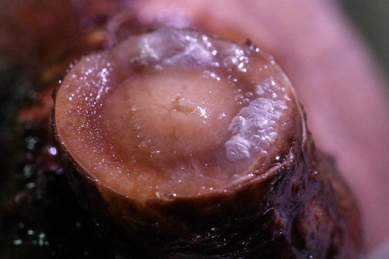 水耕栽培で発根管理するグラキリスの根の部分に発生した気泡