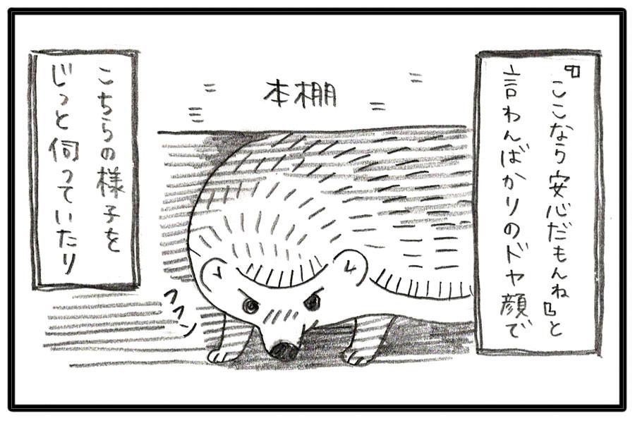 f:id:poteharibo:20170529174349j:plain