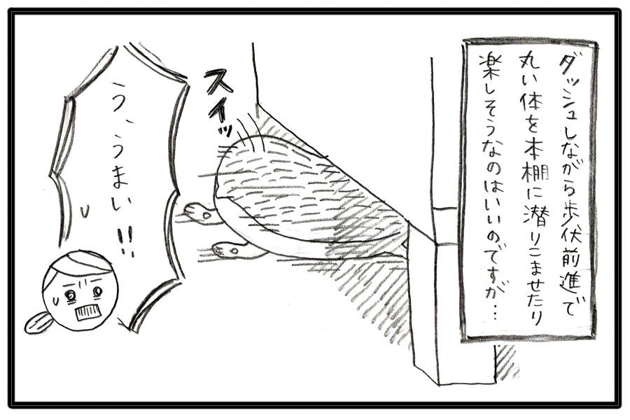 f:id:poteharibo:20170529174401j:plain