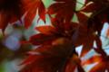 木漏れ日紅葉