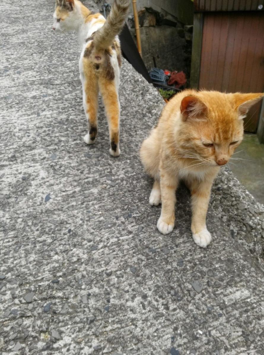 男木島 猫 猫島