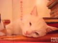 [090523猫の絵][アーチャンアート]