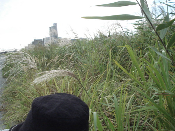 f:id:prader-willi:20111001152030j:image:w300