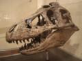 [120311恐竜の成長展2]