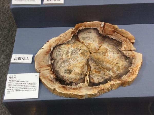 [170501自然史博物館]