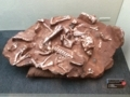 [180325恐竜の卵展]