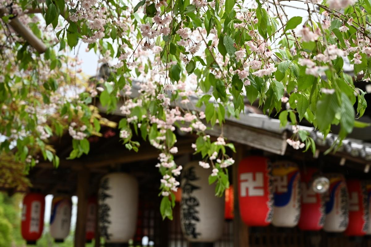 f:id:president-of-kyoto:20190427222032j:plain