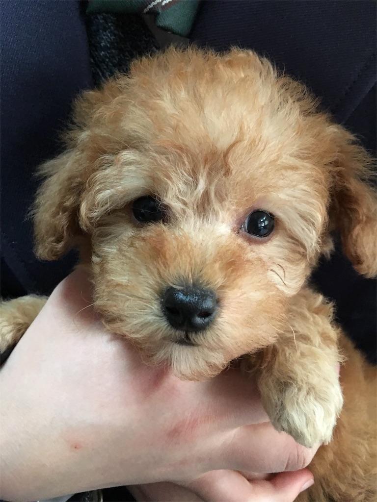 f:id:pretty-teddy:20170325031500j:image