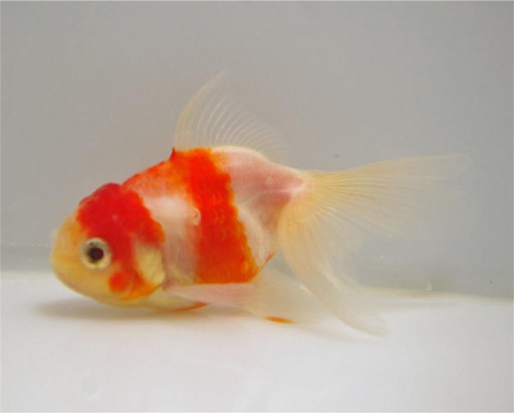 f:id:prettyfish:20170226090253j:image