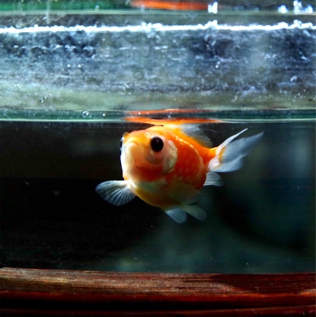 f:id:prettyfish:20170226212621j:image