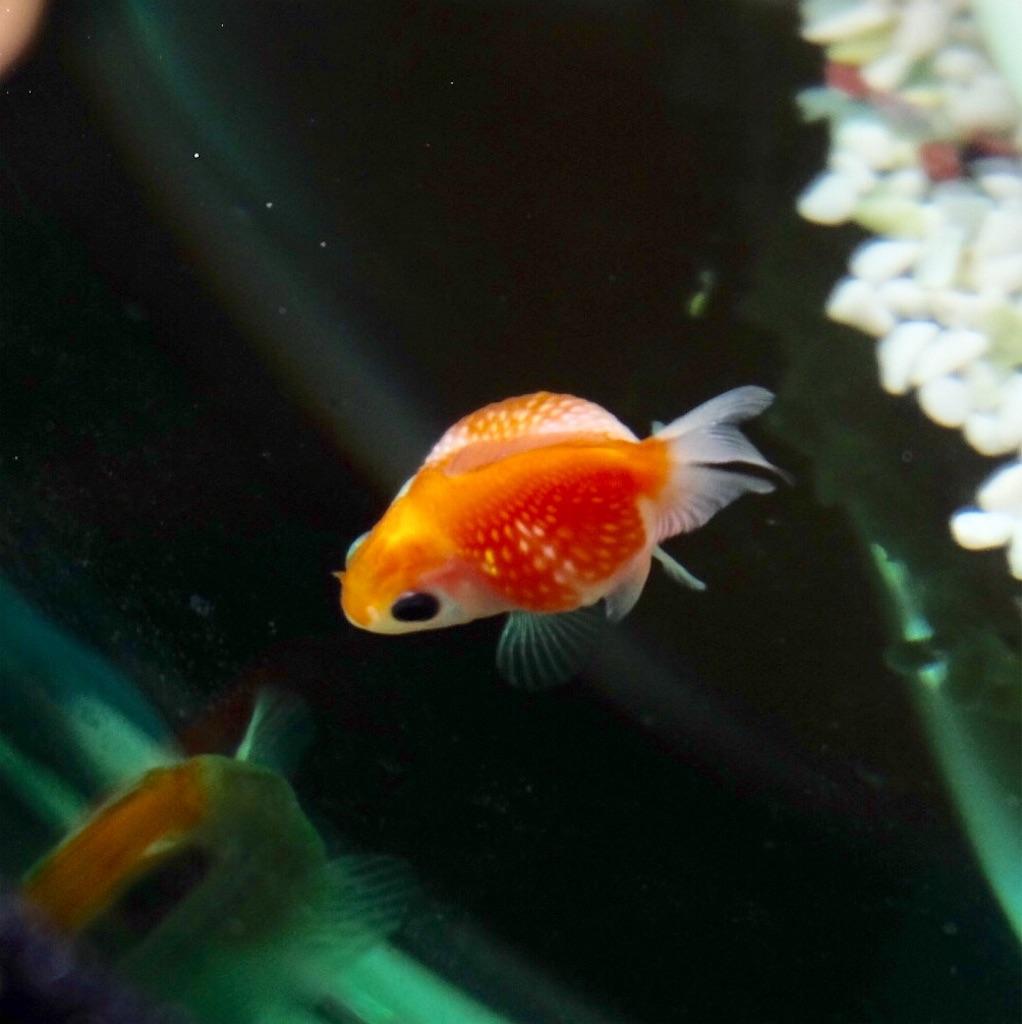 f:id:prettyfish:20170226212633j:image