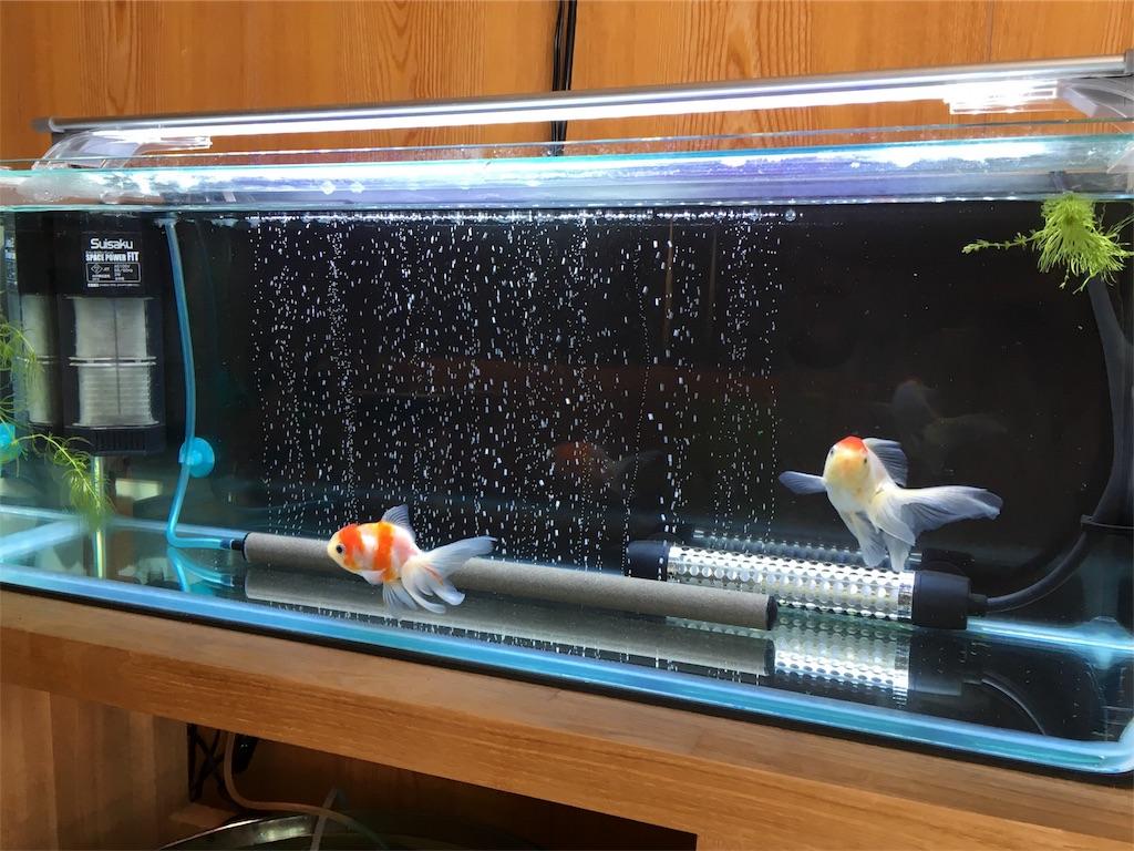 f:id:prettyfish:20170227100739j:image