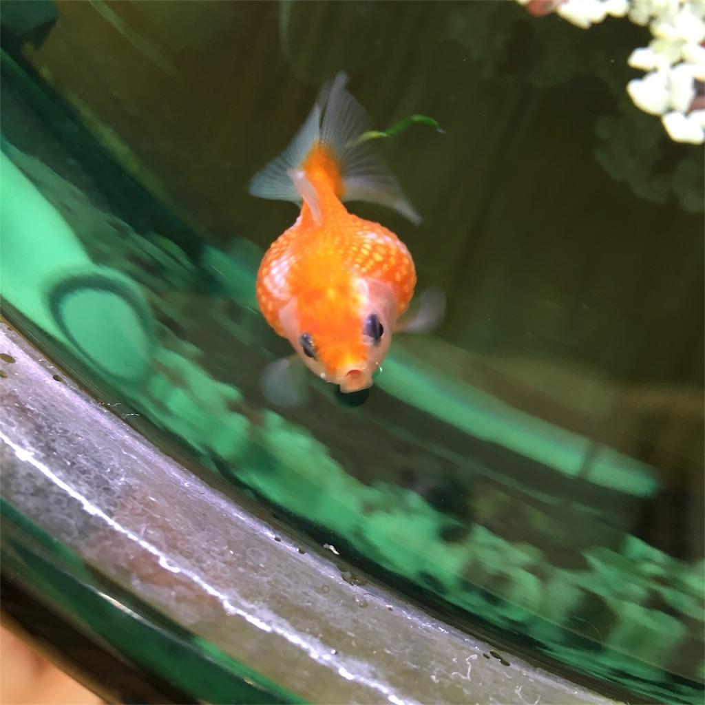 f:id:prettyfish:20170227204600j:image