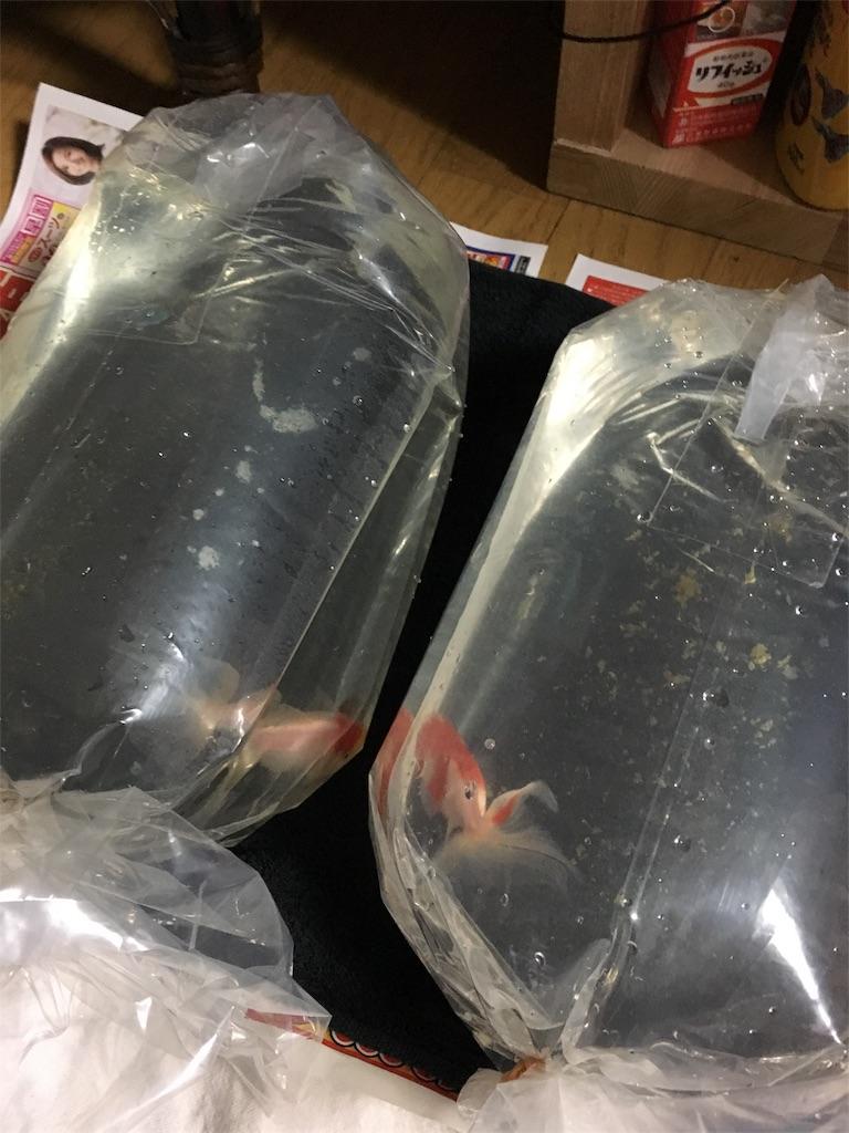 f:id:prettyfish:20170301091602j:image