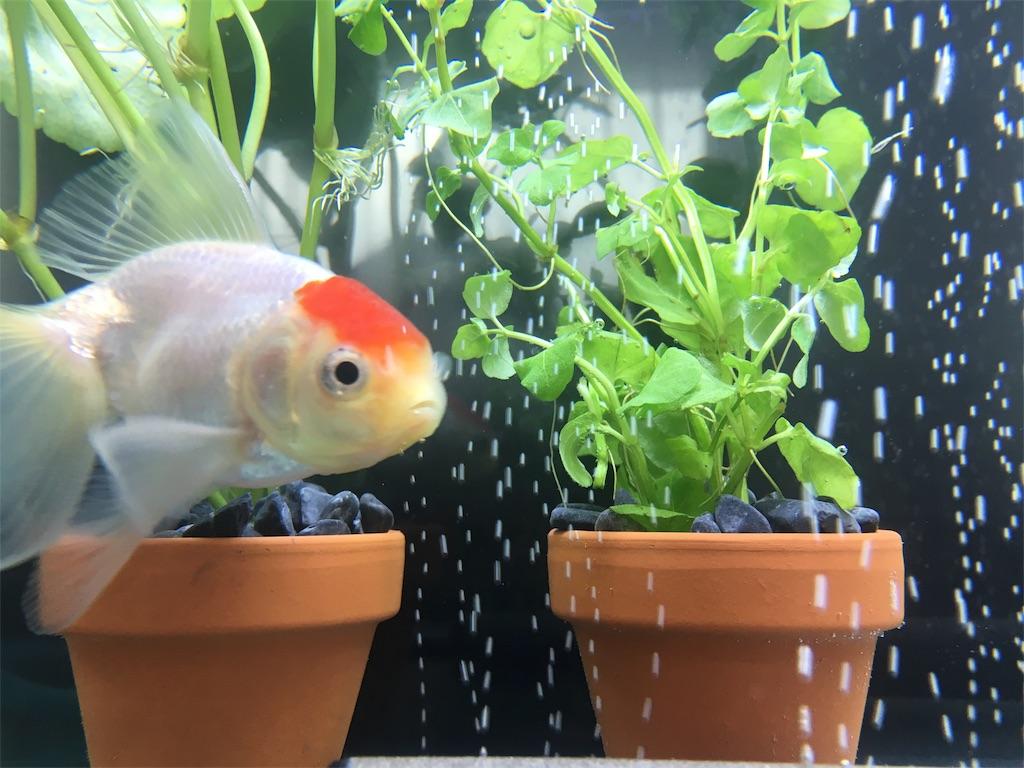 f:id:prettyfish:20170303184456j:image
