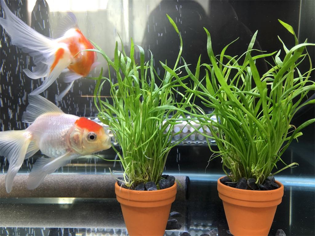 f:id:prettyfish:20170303184527j:image