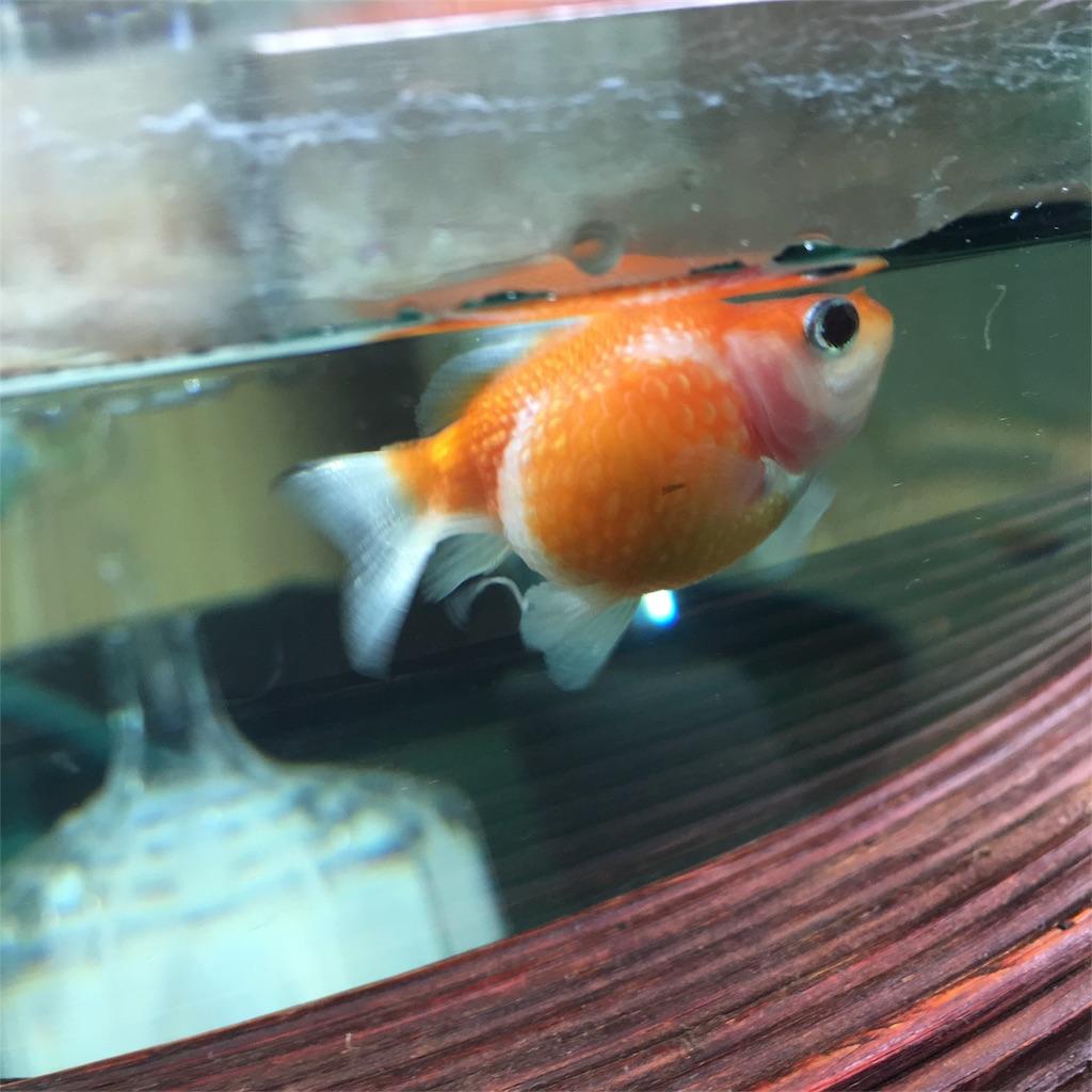 f:id:prettyfish:20170304115634j:image