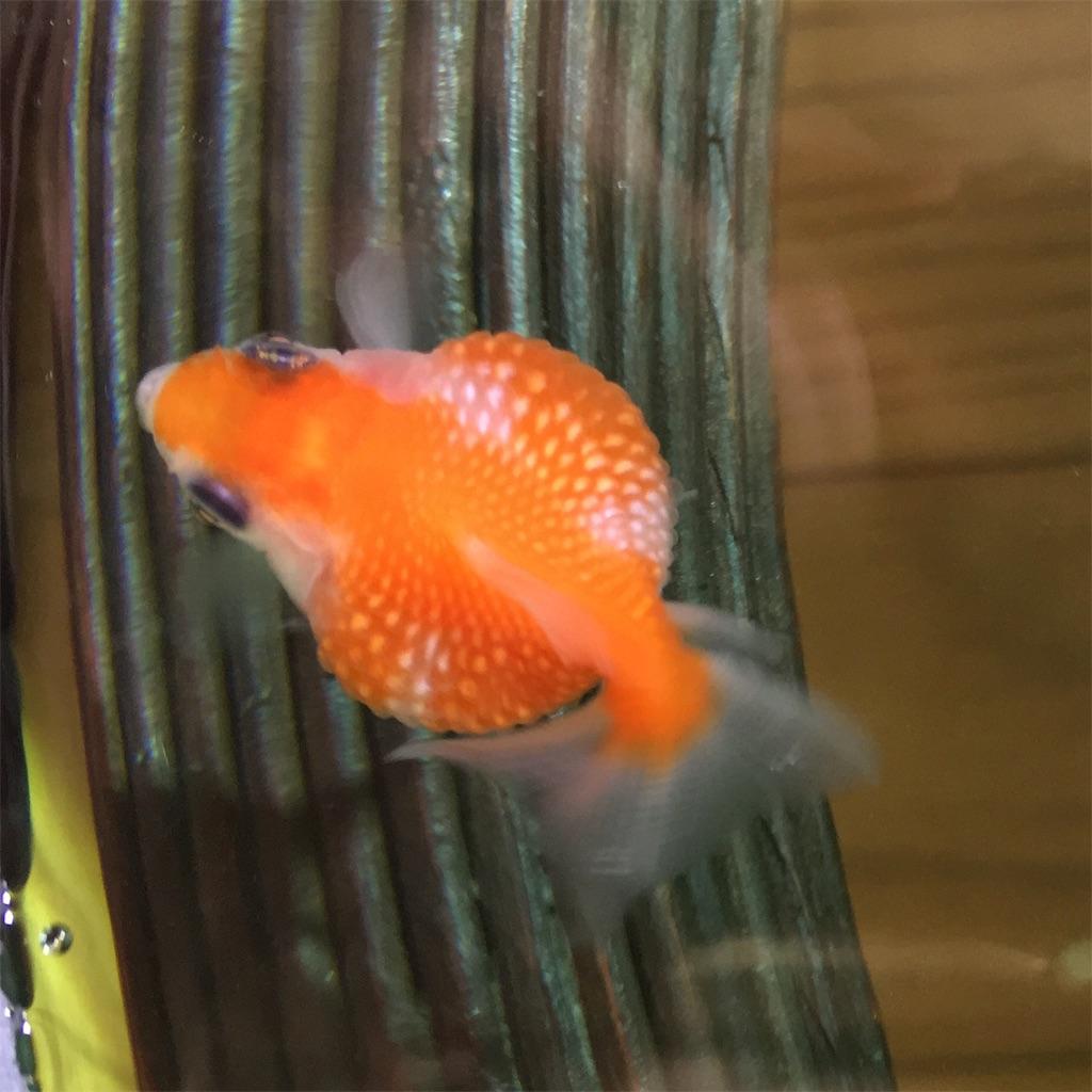 f:id:prettyfish:20170306163045j:image