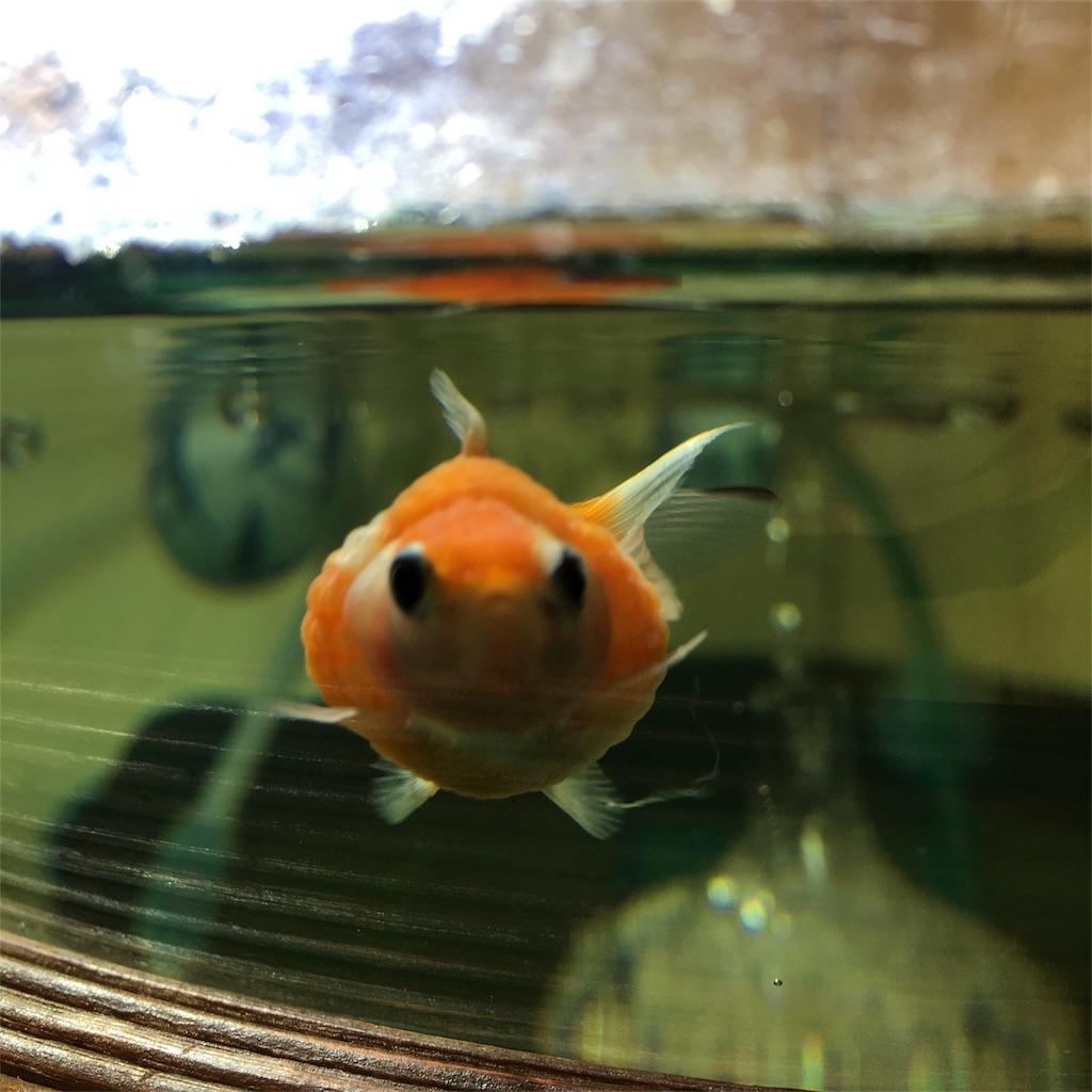 f:id:prettyfish:20170306163058j:image