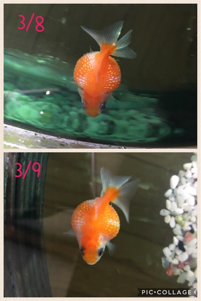 f:id:prettyfish:20170309100235j:image