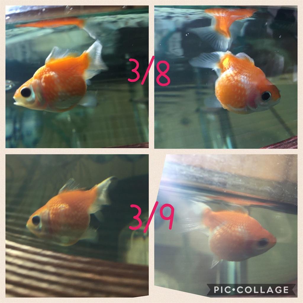 f:id:prettyfish:20170309100240j:image