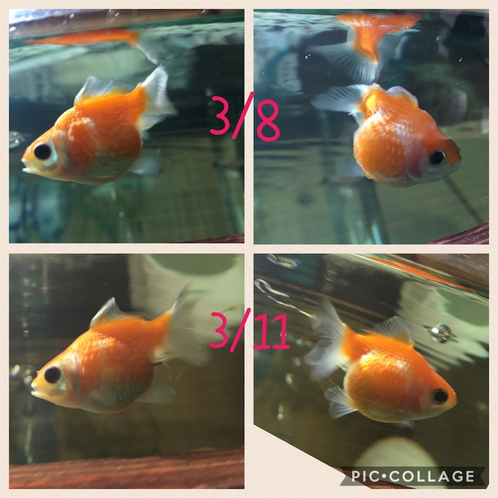 f:id:prettyfish:20170311183946j:image