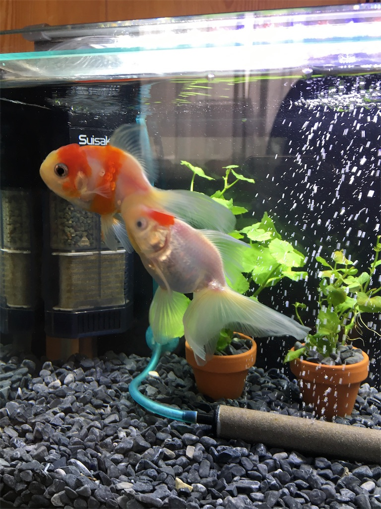 f:id:prettyfish:20170312074128j:image
