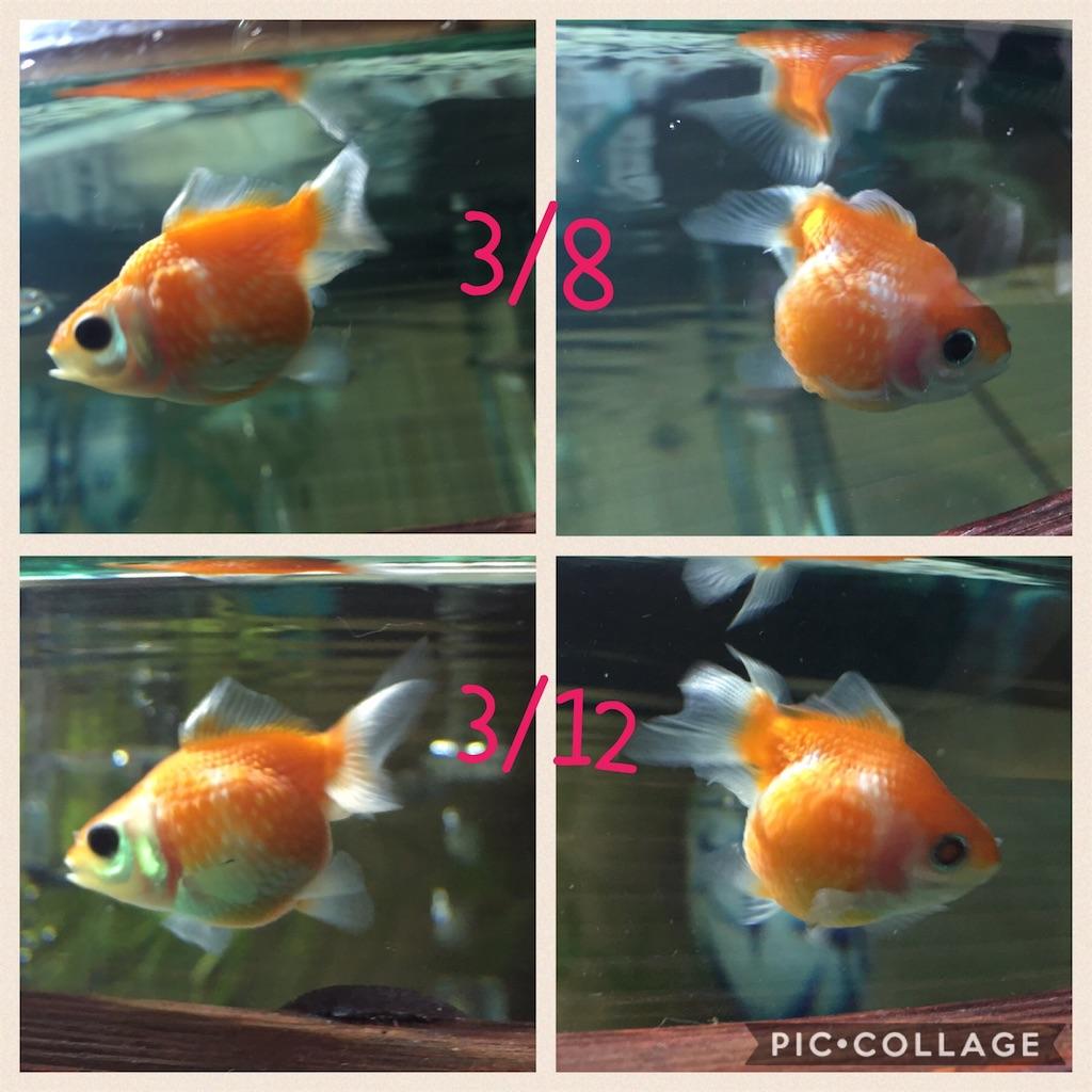 f:id:prettyfish:20170312215241j:image