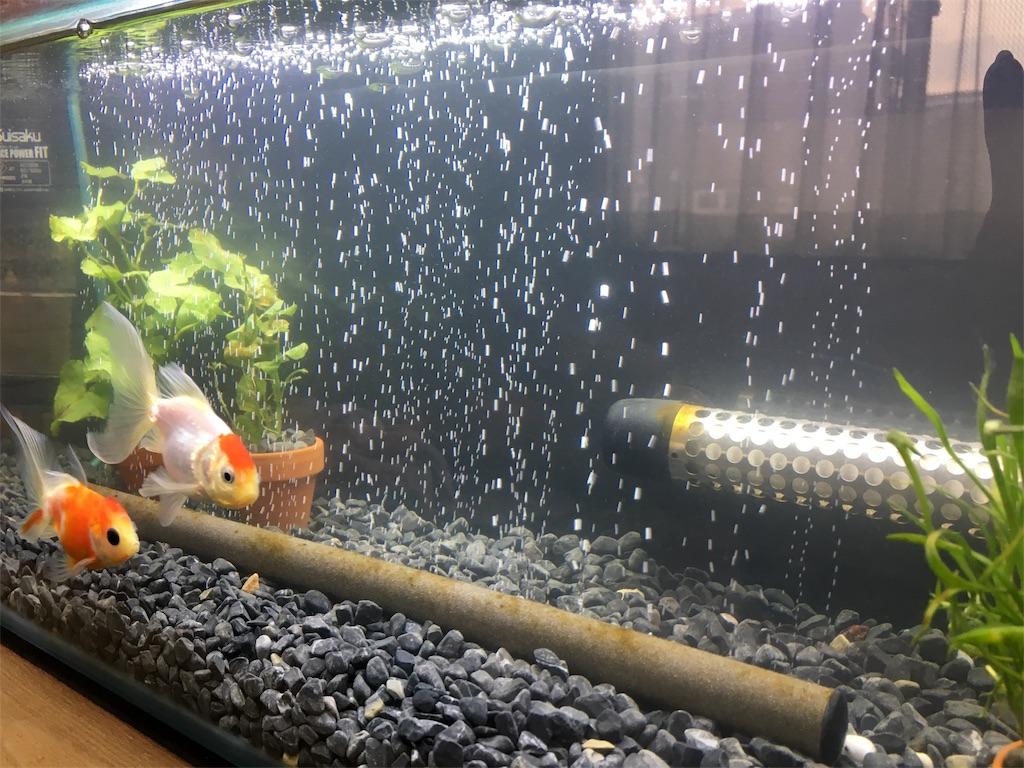 f:id:prettyfish:20170314160840j:image