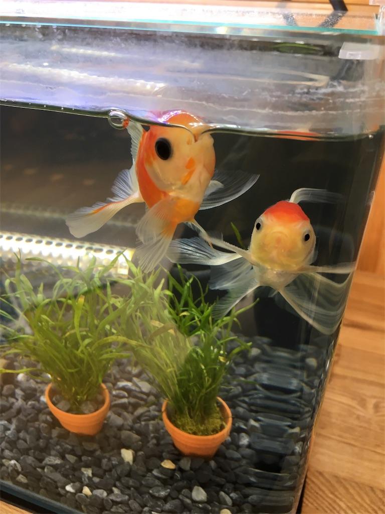 f:id:prettyfish:20170315121040j:image