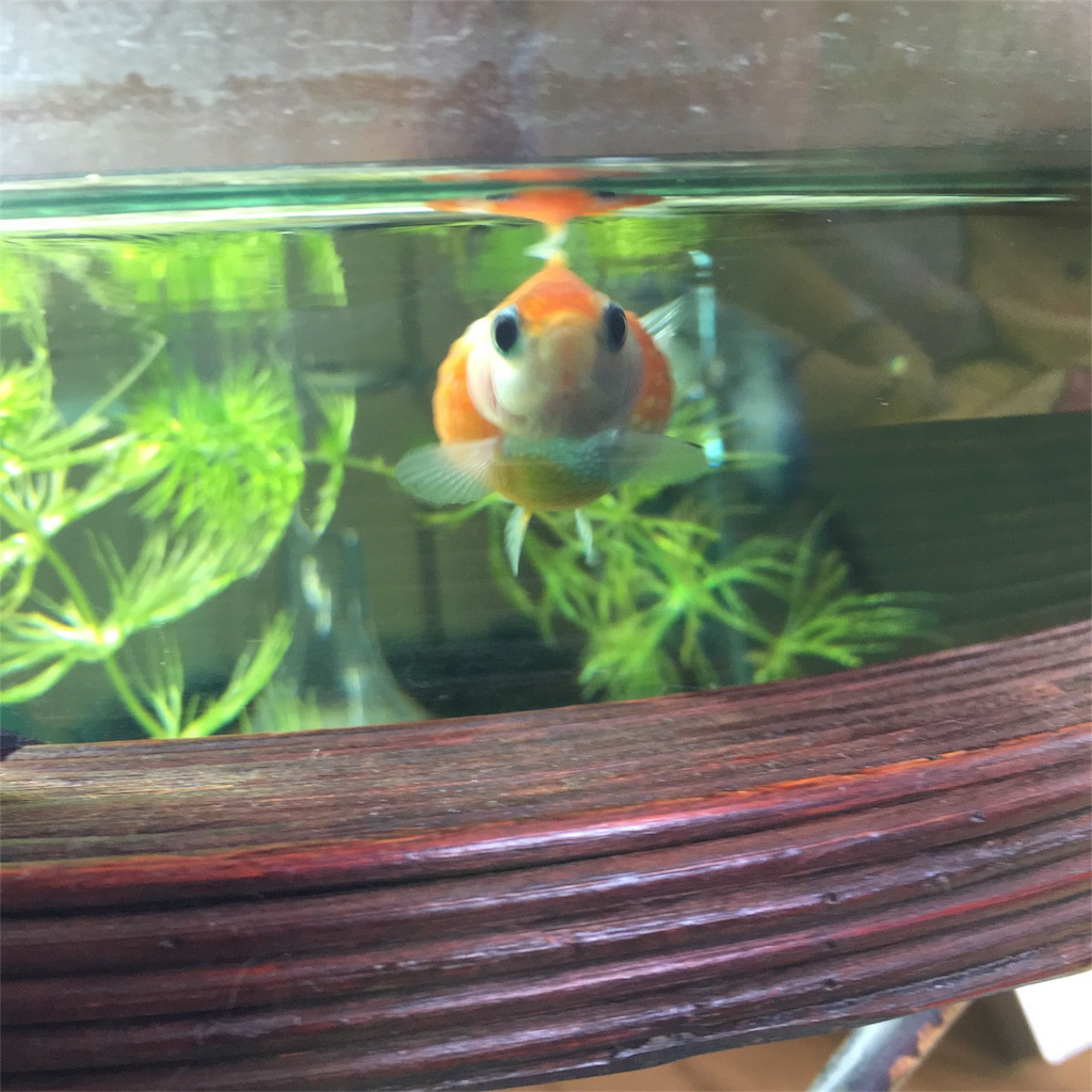 f:id:prettyfish:20170320110431j:image