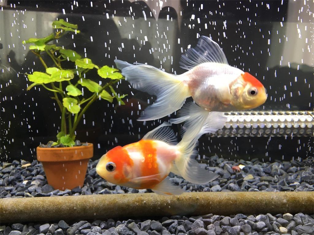 f:id:prettyfish:20170325134310j:image